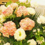 ピンクの紫陽花(2015年7月30日)