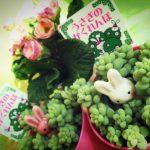 玉つづりの寄せ植え(2015年2月18日)