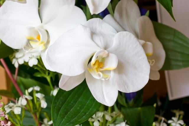 家族葬で供花を贈るときのマナー
